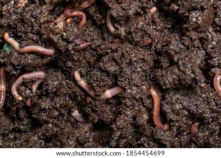 Photo of   close up of worms on the ground