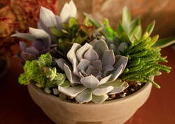 close up on a  sustainable garden comprising of different types of succulents growing next to each other in ceramic ball, different colors and shapes, on red background