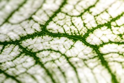 Close up Plant epidermis with stomata or Leaf Epidermis (Stomata) under microscope.