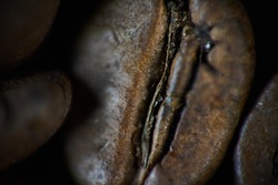 Closeup shot of coffee bean