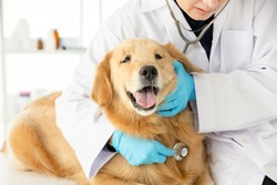 Closeup shot of veterinarian examine dog with stethoscope in v