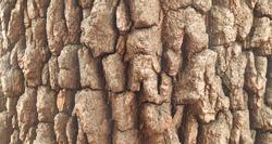Closeup Tree Bark Wood Pattern Absrtact