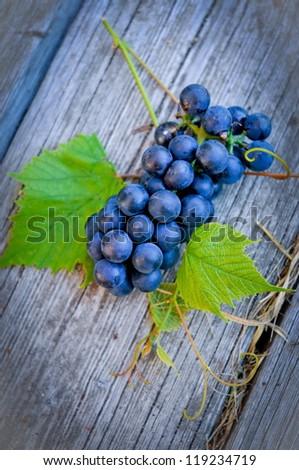 cluster of blue vine