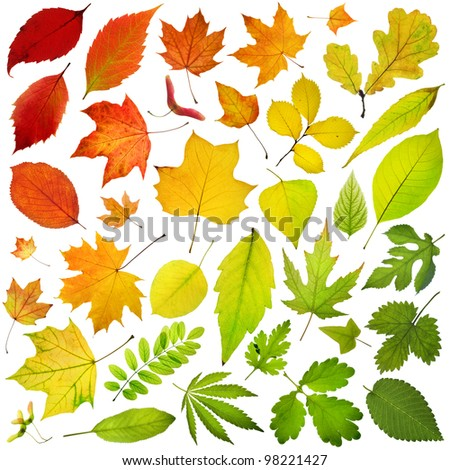 collection of  leaves isolated on white background