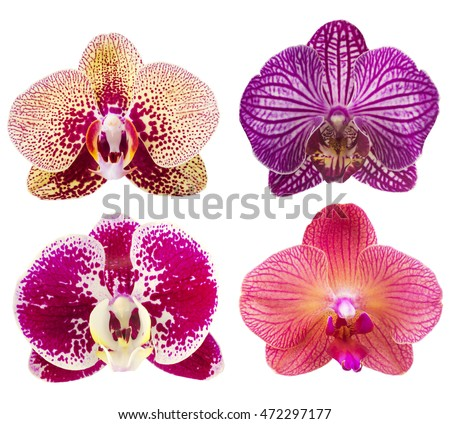 collection of orchid flower...