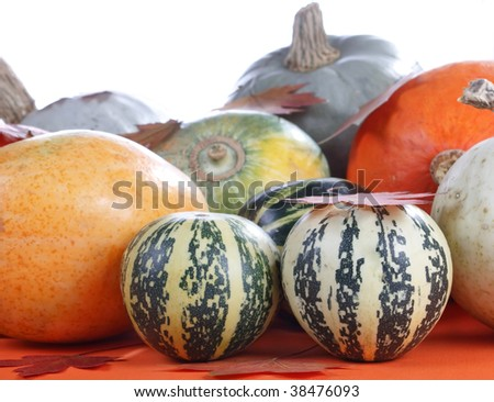 Collection of Pumpkins - stock photo