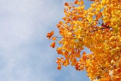 Colorful autumn leaves and branches with blurred nice blue and clouds sky background during autumn in Pennabilli,Province of Rimini,Italy.Copy space