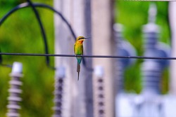 colorful Bird on a wire at electrical substation