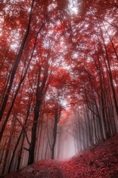 colorful foggy forest. autumn landscape.