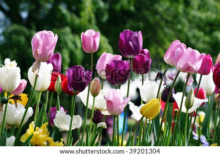 Colorful garden in springtime with trees and flowers