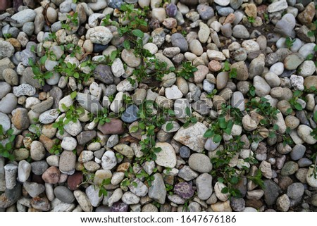 colorful multicolored pebbles background, colourful pebble texture