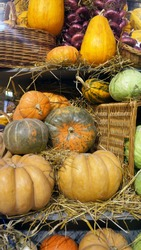 Colorful pumpkins, cabbages, onion and hay. Harvest market.  Pumpkins of different varieties and sizes.  Thanksgiving day. Crop. Autumn concept.