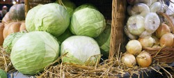 Colorful ripe cabbages, onion, garlic and hay. Harvest market.Thanksgiving day. Crop. Autumn concept.