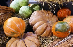 Colorful ripe pumpkins, cabbages and hay. Harvest market.  Pumpkins of different varieties and sizes.  Thanksgiving day. Crop. Autumn concept.