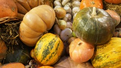 Colorful ripe pumpkins, garlic and hay. Harvest market.  Pumpkins of different varieties and sizes.  Thanksgiving day. Crop. Autumn concept.