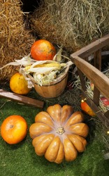 Colorful ripe  pumpkins. Harvest market. Apples and hay in the cart. Pumpkins of different varieties and sizes.  Thanksgiving day. Crop. Autumn concept.