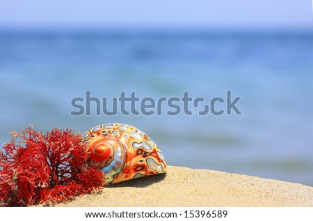 Colorful seashells and sea weed on the tropical beach