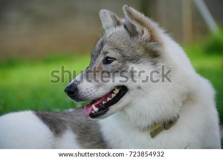 Cool dog #723854932