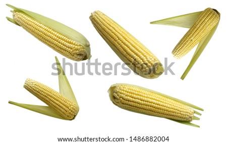 corn  corn cob  corn straw food                         #1486882004