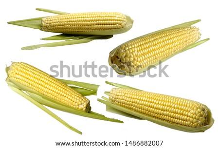corn  corn cob  corn straw food                         #1486882007