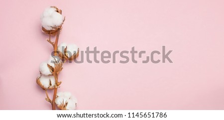 Cotton branch on pink background Flat lay Top view with space for text. Delicate white cotton flowers. Light color cotton background.