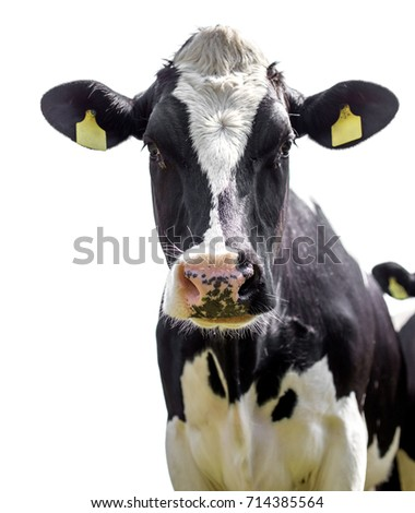 cow on a white background #714385564