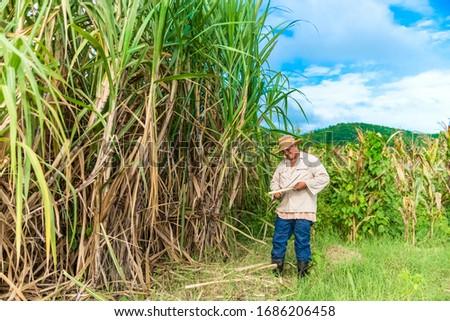 Cuban field farmer on the sugarcane field during the harvest in Santa Clara Cuba - Serie Cuba Reportage Foto stock ©