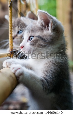 curious young kitten