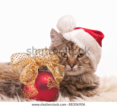 Cute cat in santa's cap with Christmas ball