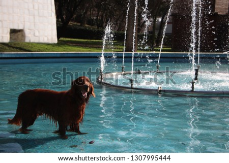 Cute dog in a fountain smiling #1307995444