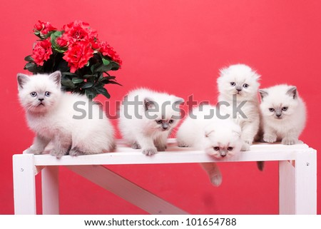 5 Cute  kittens on wooden bench with  flowers