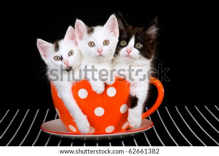 3 Cute kittens sitting inside large orange cup