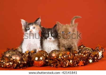 3 Cute LaPerm kittens with Christmas decorations on orange background