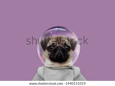 cute muzzle dog. little pug close up. animals in space. Dog breed pug. animals art image. Dog creative image. Pug bright picture. Dog advertising image.