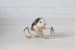cute newborn photo shoot rat mouse with big glasses on white background