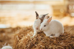 Cute rabbits are sitting on the hay. Rabbit farm.