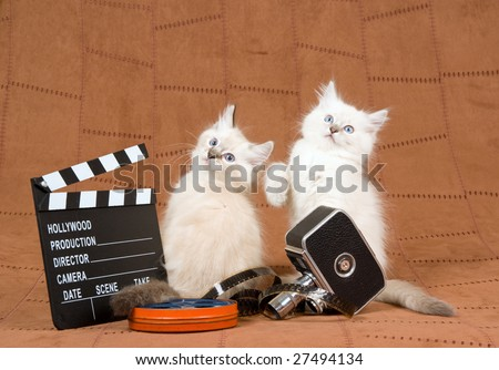 2 Cute Ragdoll kittens with vintage movie camera, movie clipboard and reel of film, on brown suede background