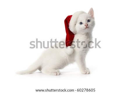 Cute white kitten with blue eyes and Christmas hat on white background - stock photo