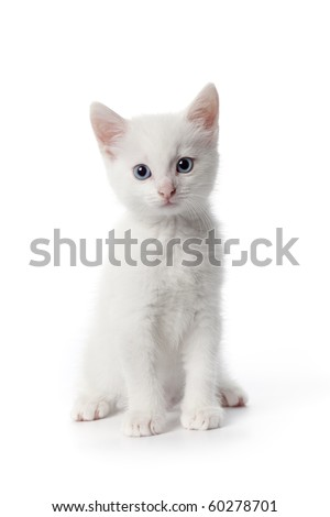 Cute white kitten with blue eyes on white background - stock photo