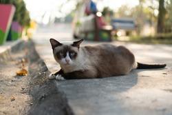 #1 CuteCat Outdoor Phatthalung Thailand