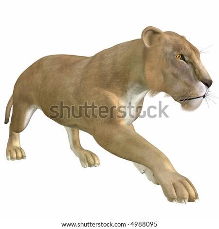 african lion pride. African+lion+pride