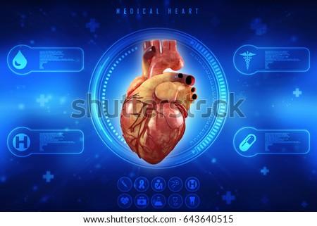 3d Anatomy of Human Heart | EZ Canvas