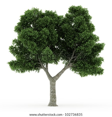 3d   ash tree isolated over white