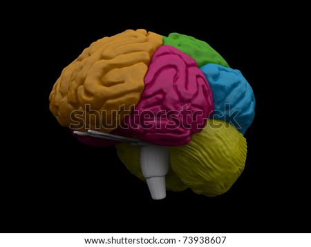 Make 3D Brain Model http://www.shutterstock.com/pic-73938607/stock-photo--d-brain-model.html