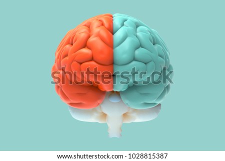 3D brain rendering illustration in front view with left and right function and activity concept isolated on pastel color background with clipping path for die cut to use in any backdrop