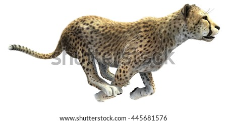 3D CG render of a big cat cheetah hunting isolated on white background