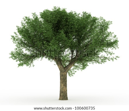 3d Cork Oak tree isolated over