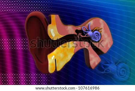 3d cross section of ear. inner ear