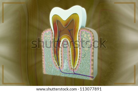 3D cross section of teeth