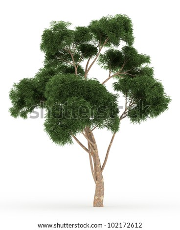 3d Eucalyptus tree isolated over white